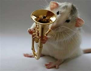 Euphonium en rat uit orkest